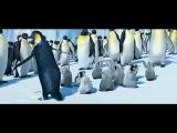 марийские пингвины